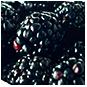 Blackberry, Blackberries, Brombeeren, blackbar – Der Frucht-Nuss-Super-Mix in Riegelform!