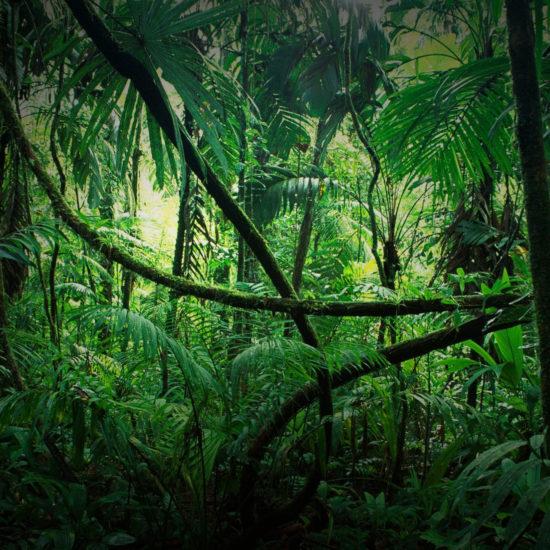 blackbar – Der Frucht-Nuss-Super-Mix in Riegelform!, Hintergrund, Dschungel