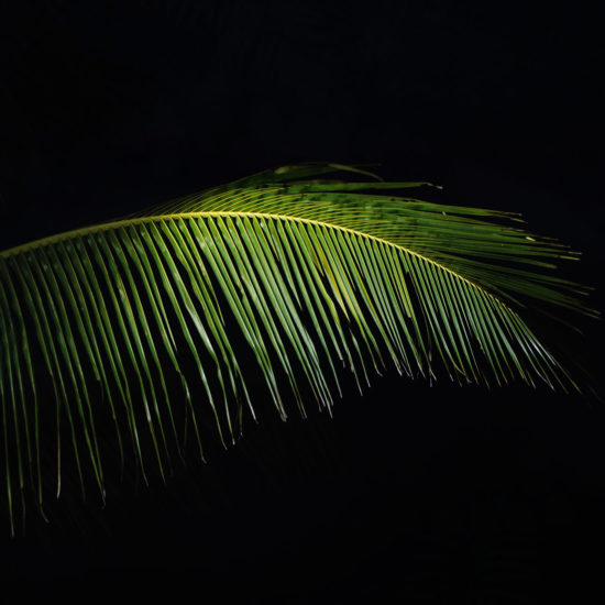 Palmblatt, blackbar – Der Frucht-Nuss-Super-Mix in Riegelform!, Hintergrund