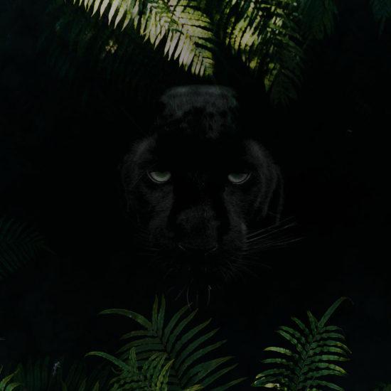 blackbar – Der Frucht-Nuss-Super-Mix in Riegelform!, Hintergrund, Panther, schwarz